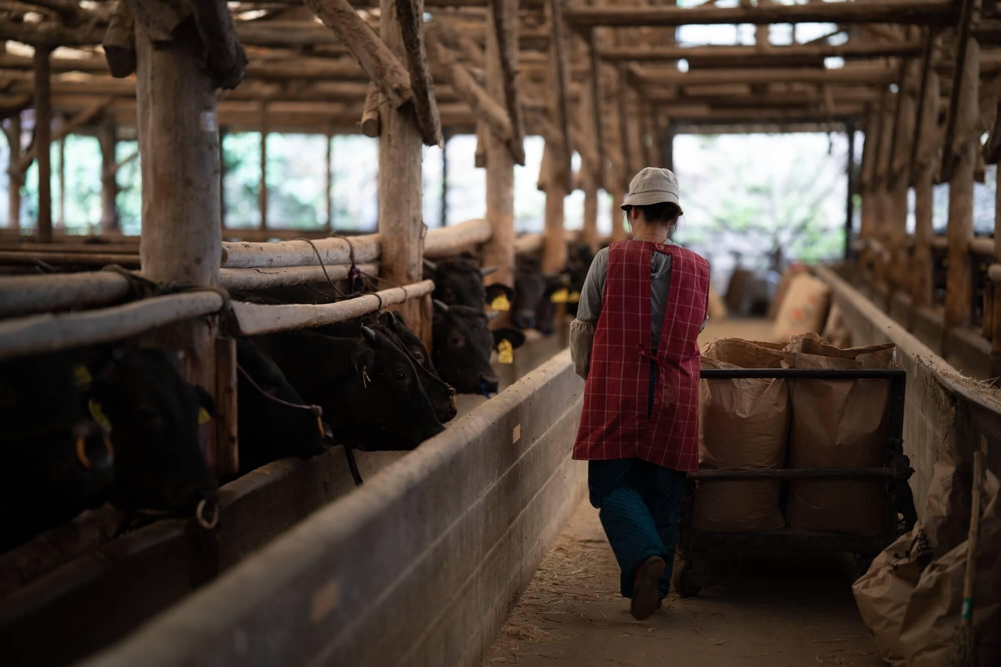 塚本畜産・牛舎小屋の風景1